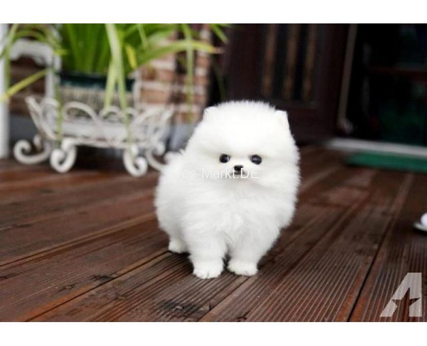 Baby Hunde Zum Kaufen