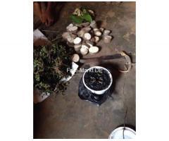 Marabout Gaba je 28-ročný kňaz marabout afrických