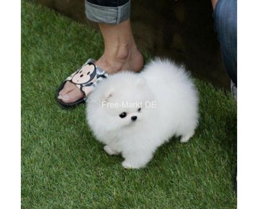 Verschenken hunde zu kleine baby Kleine Hunde