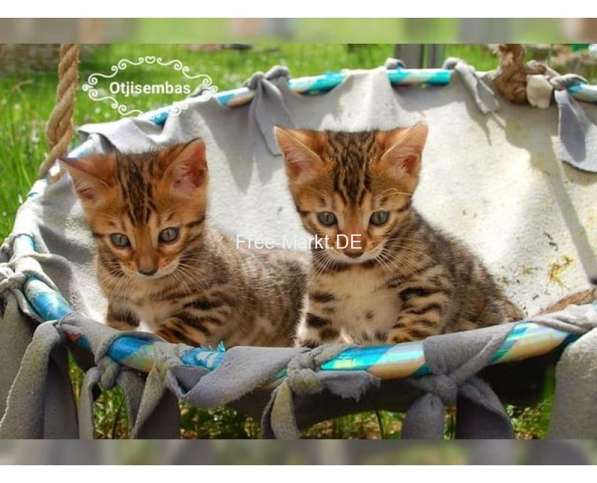 Baby Katzen Saarland