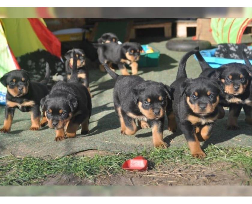 Hunde Raus Aus Deutschland