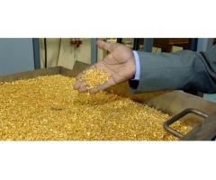 AU Goldbarren, Goldnuggets, Goldstaub und Coltan zu verkaufe