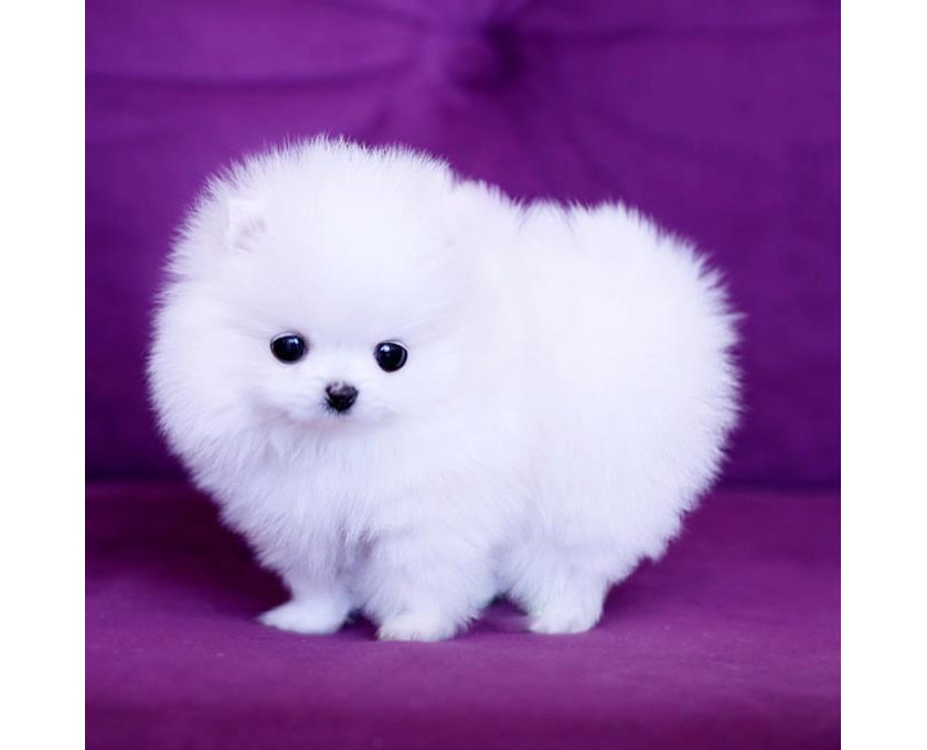 Baby Hund Kaufen