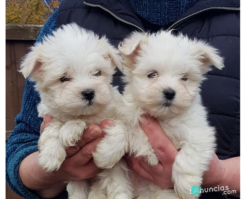 Kostenlose Kleinanzeigen   Verkaufen und Kaufen   Deutschland   Hunde   Germany   Sachsen-Anhalt