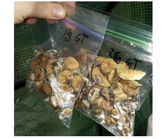 Køb magiske svampe, stuer, canabis, marihuana, MXM-pulver, 1