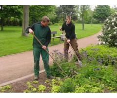 Die richtige Pflege für Ihren Garten